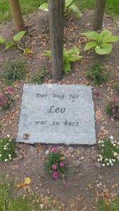Leo_1